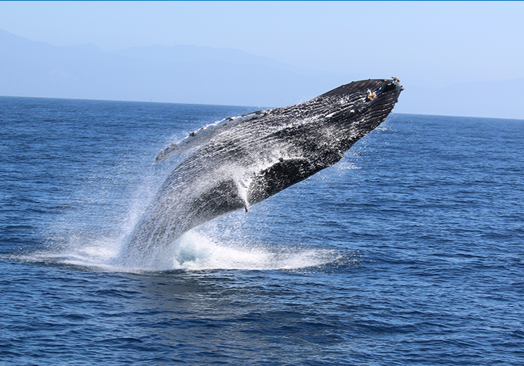 Whale Watching at Mexico